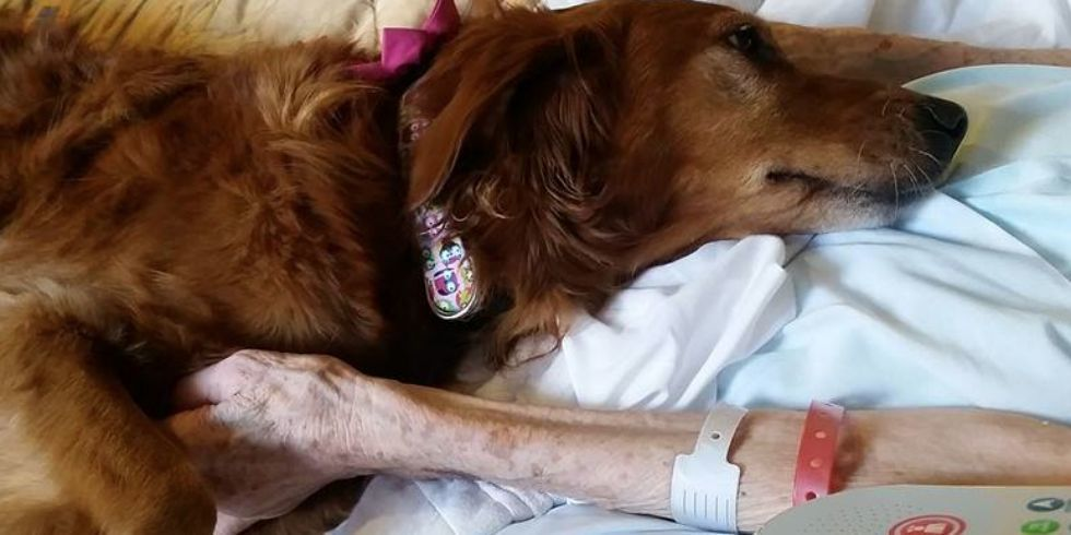 Touching Video of Therapy Dog Comforting Hospice Patient Will Make Your Heart Melt