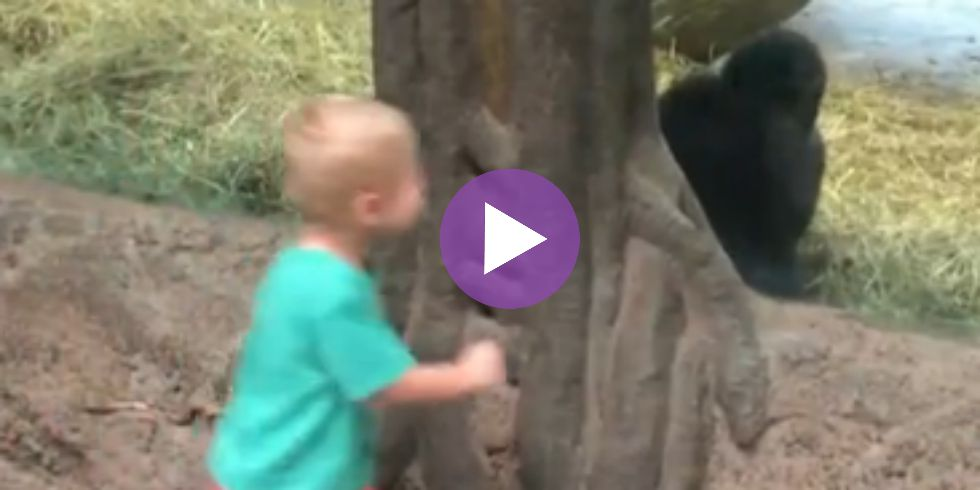 WATCH: Baby Gorilla Plays Adorable Game of Peek-a-Boo with Toddler