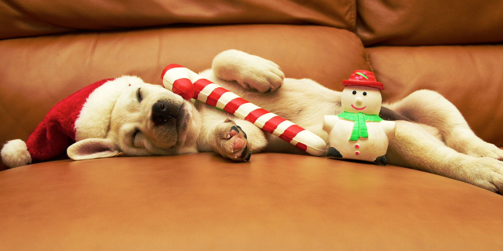 22 Ridiculously Adorable Photos of Pets in Santa Hats