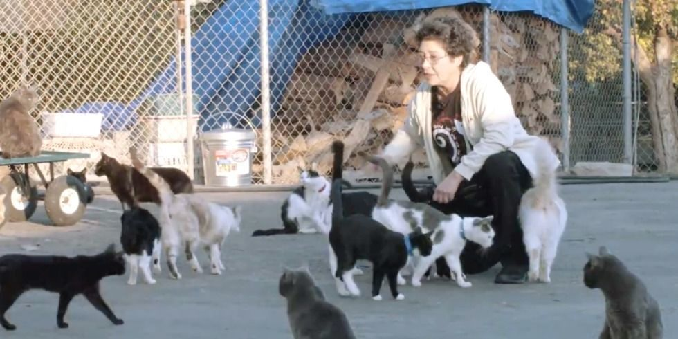 The Ultimate Cat Lady Meet Woman Who Owns Over 1000 Cats