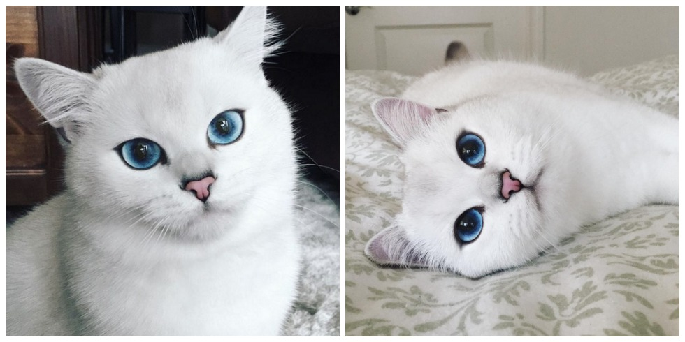 We Can T Stop Gazing Into This Cat S Gorgeous Eyes