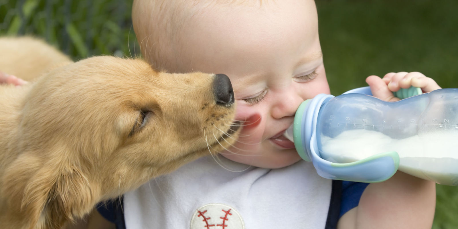 Dogs And Newborns How To Stop A Dog From Licking