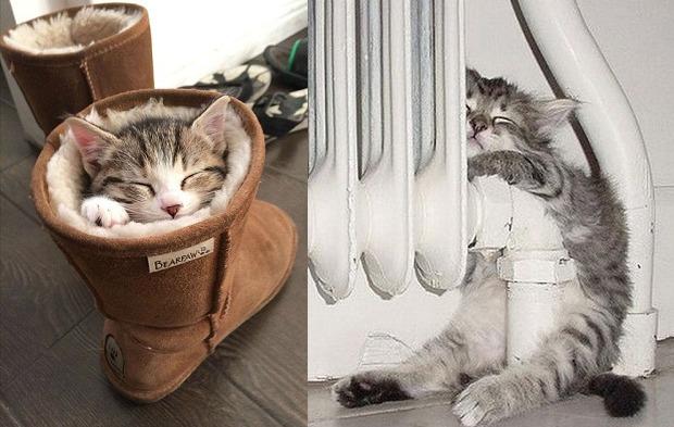 cheapest cat neutering