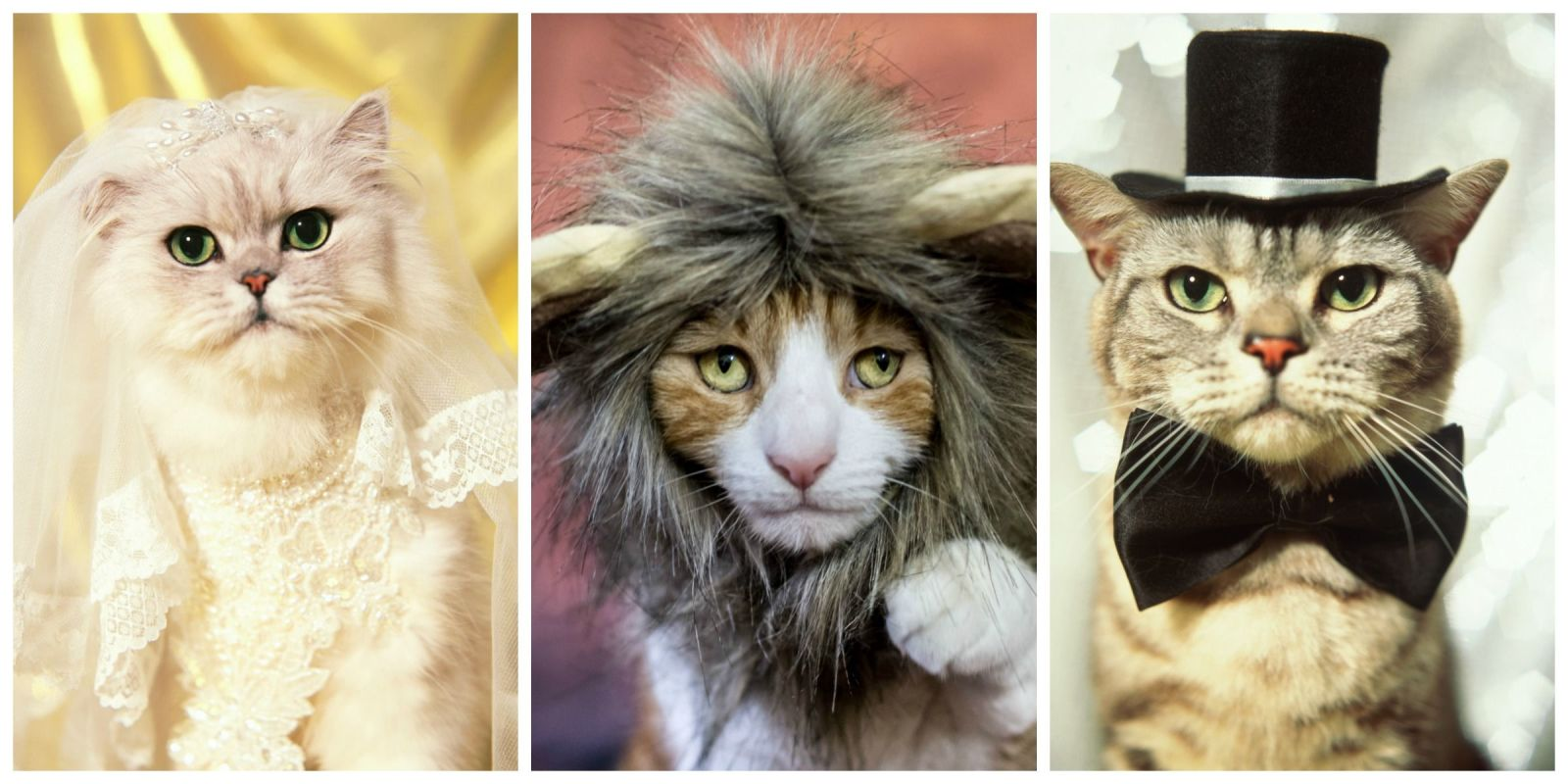 30 pet cat halloween costumes 2017 cute ideas for cat costumes - Halloween Costumes For Kittens Pets