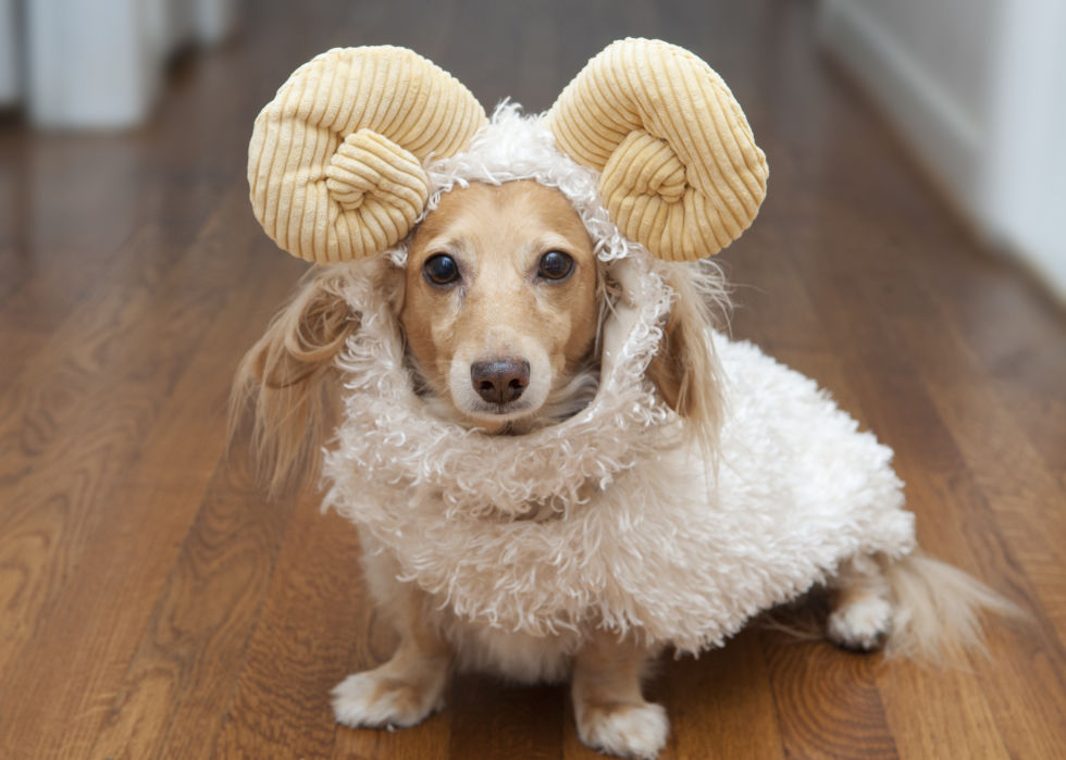 ... Ram Costume for Dogs ... & Fun Without the Fright: Adorable Halloween Pet Costumes and Safety ...