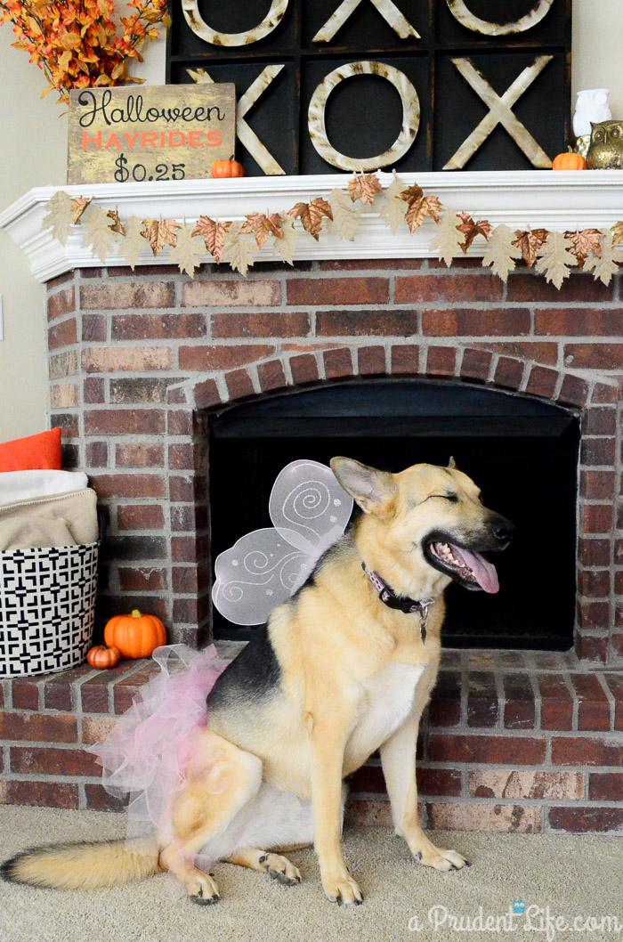 best 25 pet corner ideas on pinterest dog corner puppy room