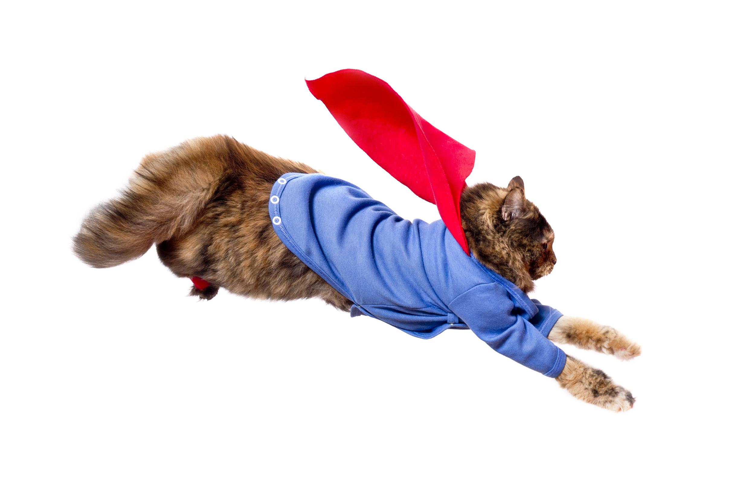 Pet Cat Halloween Costumes 2016 Cute Ideas For Cat Costumes