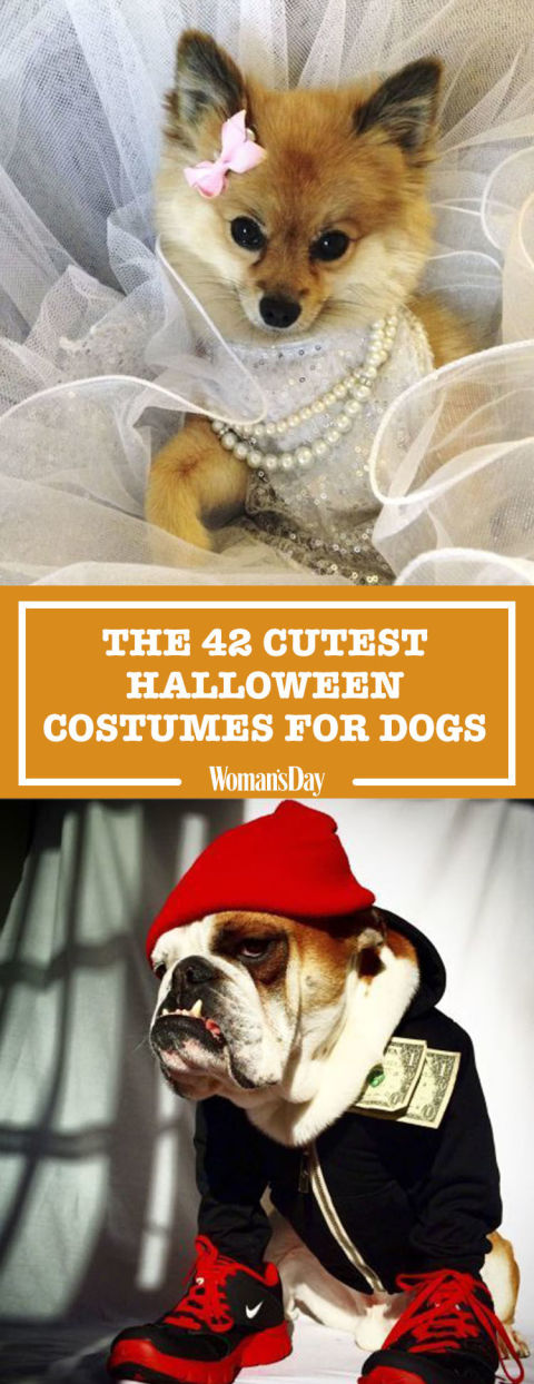 pin this image - Dog Halloween Ideas