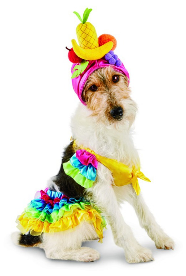 53 funny dog halloween costumes cute ideas for pet costumes - Halloween Costume For Small Dogs