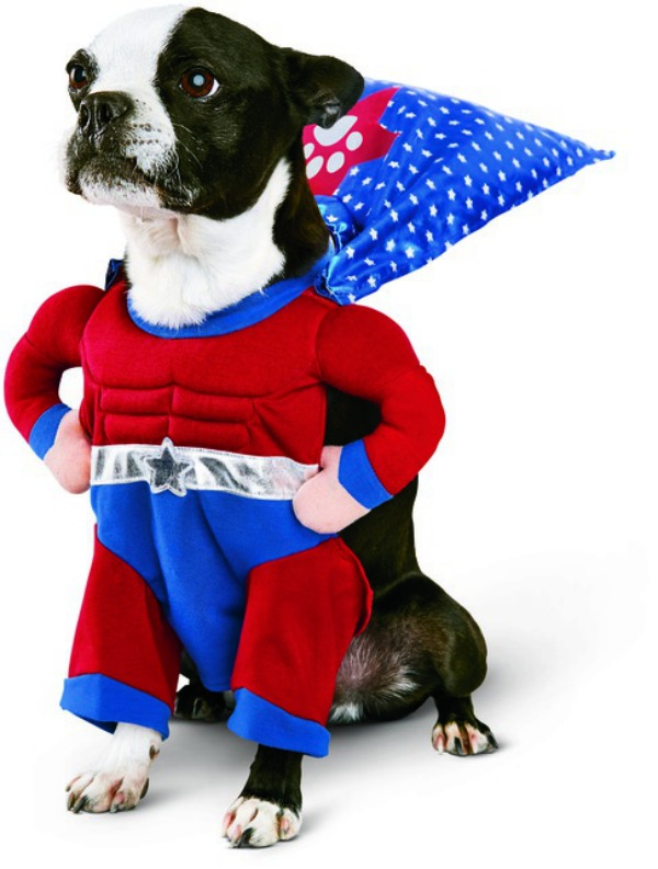 53 funny dog halloween costumes cute ideas for pet costumes - Halloween Costumes In Boston