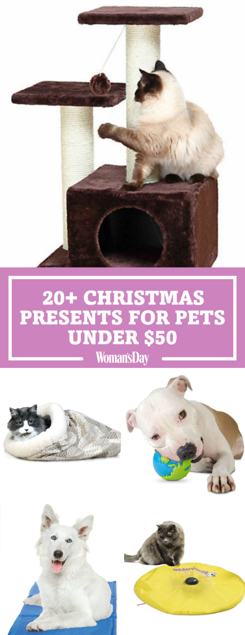 Awesome Presents From The Dog Part - 9: Pin These Ideas!