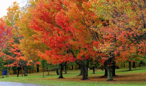 9 Fabulous Fall Landscapes