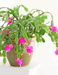 Recommended Indoor House Plants At Common