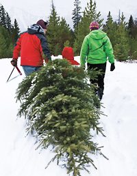 Christmas Tree Buying Guide How To Score The Perfect Christmas  - Christmas Trees To Cut Down