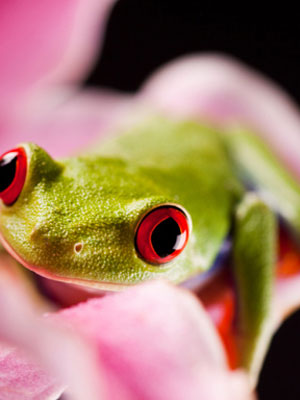 Interesting Animal Facts: All About Reptiles
