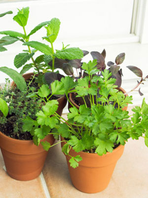 Indoor vegetable garden tips at winter gardening tips - Growing vegetables indoors practical tips ...