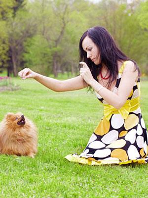 tricks to teach dogs and how to teach them