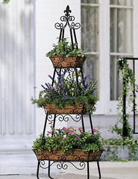 WDs Guide to Container Gardening