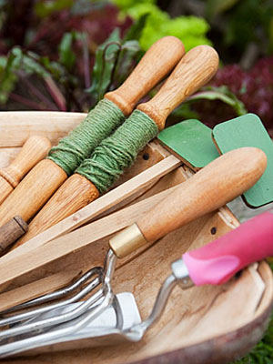 Gardening Tips Winter Gardening at WomansDaycom