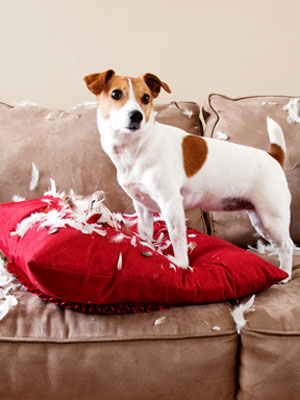 Image result for images of badly behaved dogs