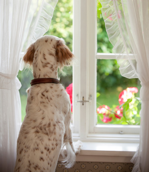 Common Dog Fears Anxiety In Dogs