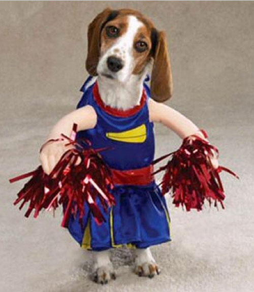 53 funny dog halloween costumes cute ideas for pet costumes - Dogs With Halloween Costumes On
