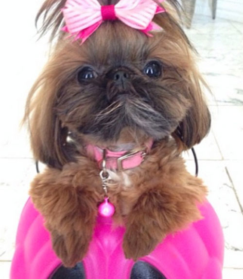 53 funny dog halloween costumes cute ideas for pet costumes - Dog Halloween Ideas