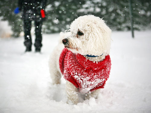 Exercising With Your Dog In Winter Indoor Activities For