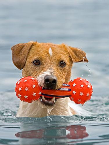 Dog Swimming Dog Safety