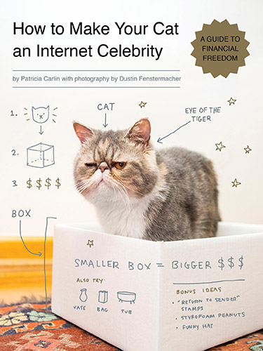 How To Make Your Cat Famous Ways To Make A Cat An Internet Celebrity - 10 famous cats internet