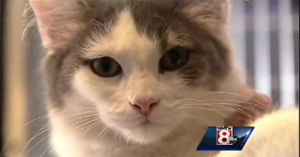 Missing Cat from New Mexico Mysteriously Shows Up in Maine